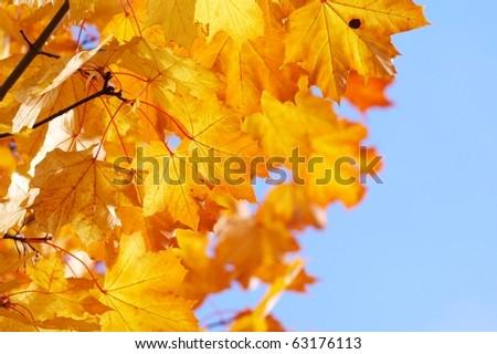 autumn, fall background