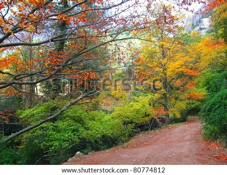 autumn fall colorful golden yellow leaves from a beech trees forest - stock photo