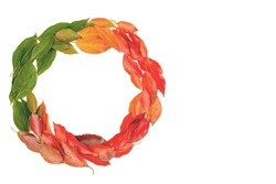 autumn fall flat lay, top view arrangement, wreath of autumn leaves on white background, flat lay, top view