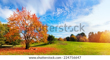 Autumn, fall landscape with a tree full of colorful, falling leaves, sunny blue sky. Wide perspective, panorama. Perfect seasonal theme.