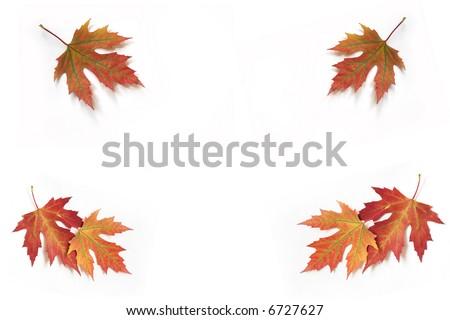 Autumn fall leaves 7.