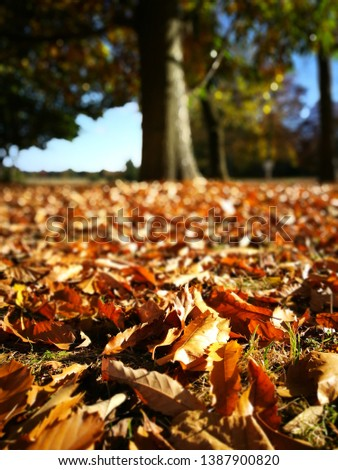 Autumn fall leaves on the ground #1387900820