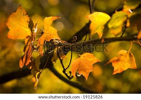 Autumn fall orange leaves #19125826