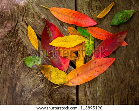 Autumn fall red golden dried leaves over aged wood