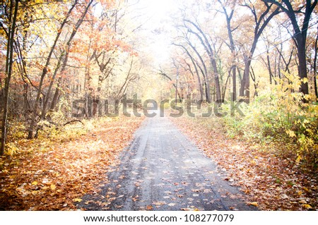 Autumn fall road surrounded by red and yellow leave trees