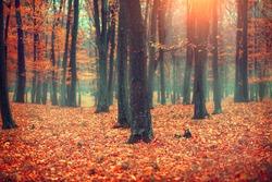 Autumn, Fall scene. Beautiful Autumnal park. Beauty nature scene. Autumn landscape, Trees and Leaves, foggy forest.