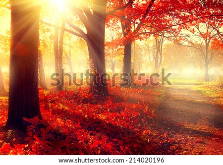 Stock Photo Autumn. Fall scene. Beautiful Autumnal park. Beauty nature scene. Autumn Trees and Leaves, foggy forest in Sunlight Rays
