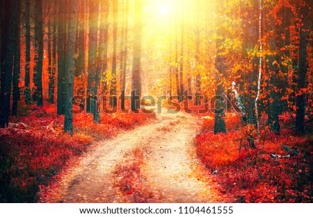 Autumn, Fall scene. Beautiful Autumnal park with pathway. Beauty nature scene. Autumn landscape, Trees and Leaves, forest with bright red leaves on trees and bright sun #1104461555
