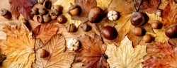Autumn fall seasonal composition with yellow maple leaves, rowan berries, chestnuts and decorative pumpkins over wooden texture background. Flat lay, copy space. Banner