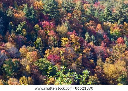 Autumn, fall, seasonal tree colors