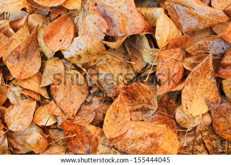 Autumn fallen colored leaves