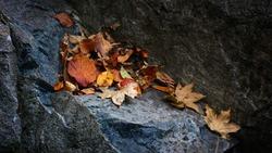 Autumn fallen leaves loneliness rocks lonely