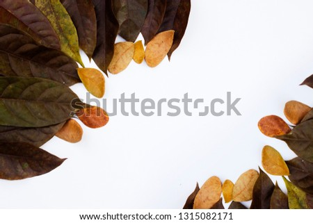 Autumn falling leaves and copyspace for text. Isolated on white background #1315082171