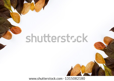 Autumn falling leaves and copyspace for text. Isolated on white background #1315082180