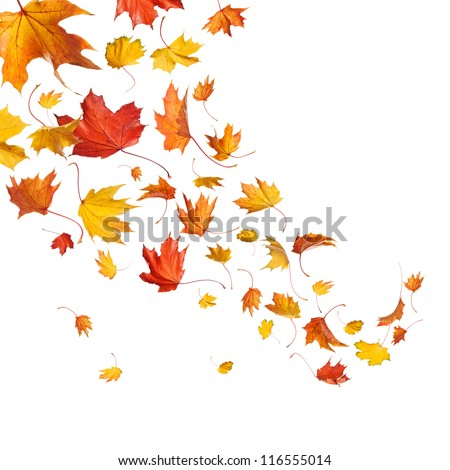 Autumn falling leaves isolated on white background #116555014