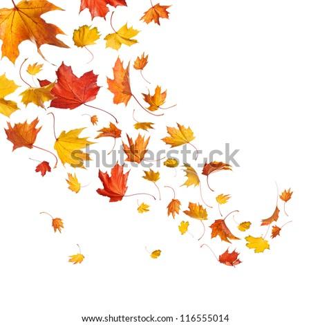 Autumn falling leaves isolated on white background - stock photo