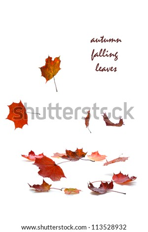 autumn falling leaves with shadow on white background