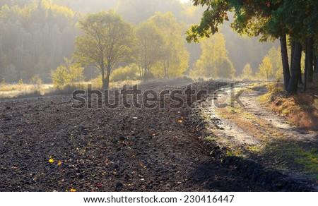 Autumn Field Zdjęcia stock ©