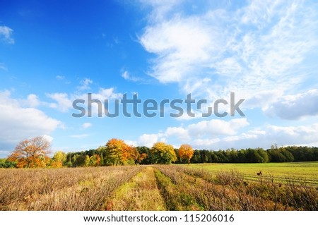 Autumn fields and cloudy sky Poland