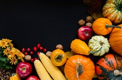 Autumn flat lay composition, with copy space on black background. Variety of edible and decorative gourds and pumpkins, rosehips, walnuts, cones, apples, flowers, kaki fruit and corn on the cob.