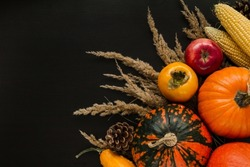 Autumn flat lay composition, with copy space on black background. Variety of edible and decorative gourds and pumpkins, cone, apple, flowers, kaki fruit and corn on the cob.