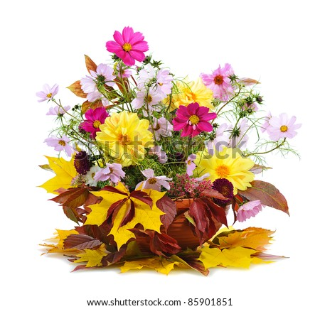 autumn floral composition with georgina  isolated on white background