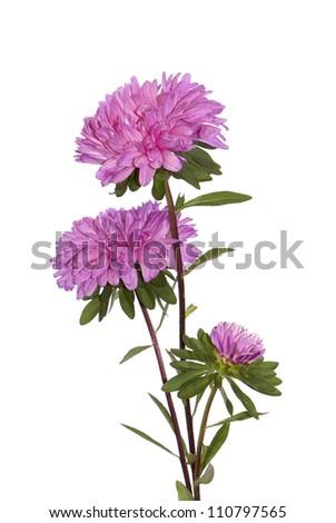Autumn flower design over white backgrounds