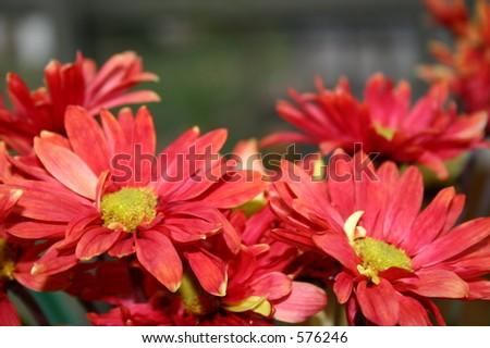 Herbst-Blumen