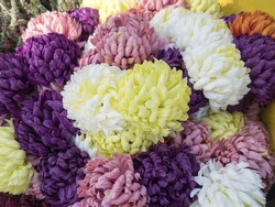 Autumn flowers, asters, chrysanthemums, geoggins. Pink, red, white, purple, yellow