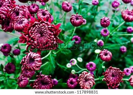 Autumn flowers in the garden closeup with blurred background