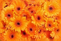 Autumn flowers, summer blossoming orange gerbera flower background, fall floral festive card