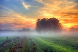 Autumn fog at misty fields in Poland