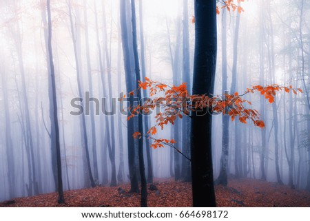 Autumn foggy forest. Fall colors old misty wood - Shutterstock ID 664698172