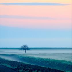 autumn foggy morning on field