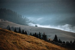 Autumn foliage and fog. Misty mountains with evergreen trees.Creative,vintage concept