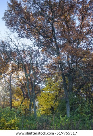 Autumn foliage at Oldfield Oaks Forest Preserve, DuPage County, Illinois