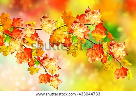 autumn foliage. golden autumn....
