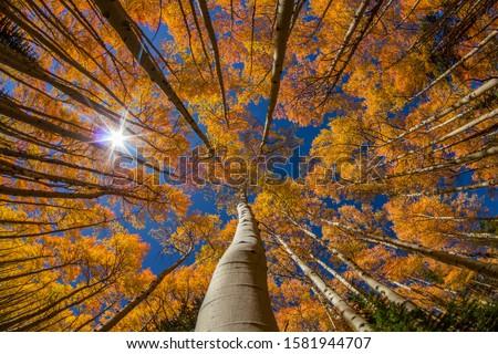 Autumn Foliage in Breckenridge Colorado Foto d'archivio ©