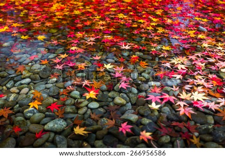 Autumn foliage in Japan. - stock photo