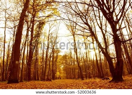 Autumn forest-2
