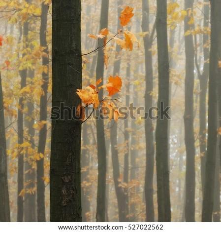 autumn forest - Shutterstock ID 527022562