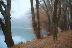 Autumn forest and fog near river - beautiful wild landscape, golden fallen leaves and branches, nature and season details,