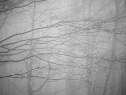 Autumn forest at foggy weather