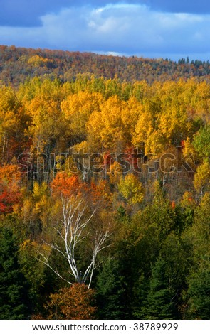 Autumn forest at Sussex, New Brunswick, Canada