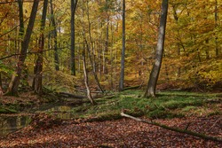 Autumn forest at the