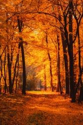 Autumn forest at warm fall day sun shining through golden foliage.