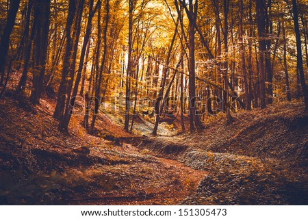 Autumn forest. Beautiful nature background.
