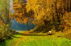 Autumn forest bench fall landscape. Forest bench in autumn fall