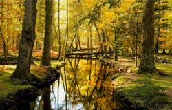Autumn forest calm river water landscape