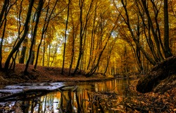 Autumn forest creek landscape. River creek in autumn forest. Woodland creek water view. Autumn forest water